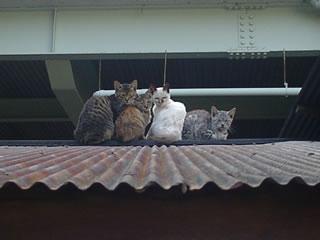仔猫カルテット