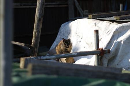 資材置き場の猫