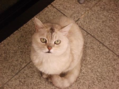 散髪屋の猫
