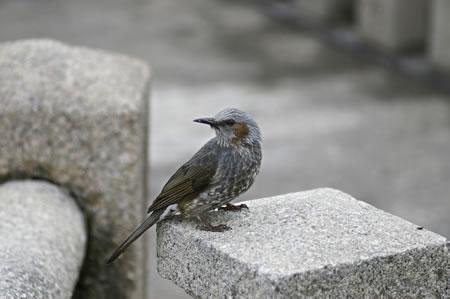見慣れぬ鳥
