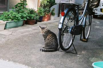 玄関先の猫