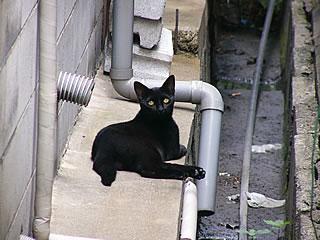 排水溝の猫