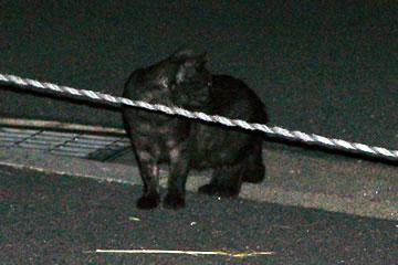 あぜ道の猫