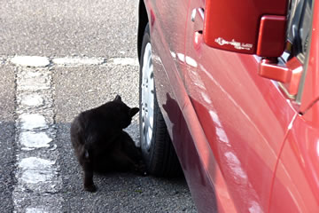 ガレージの猫