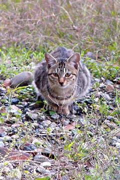 空き地の猫