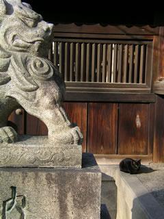 狛犬と黒猫