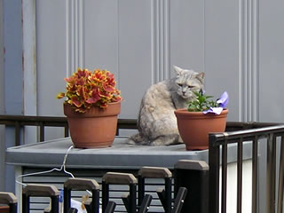 植木鉢と猫