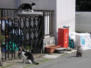 玄関先の猫達