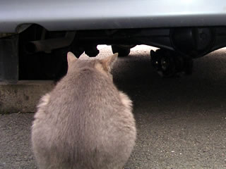 ガレージの猫達