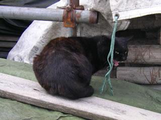 資材置き場の黒猫