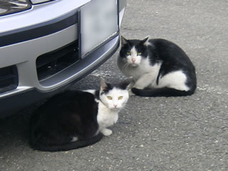 住宅地の猫達