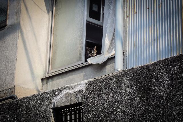 2013年09月13日の今日の猫