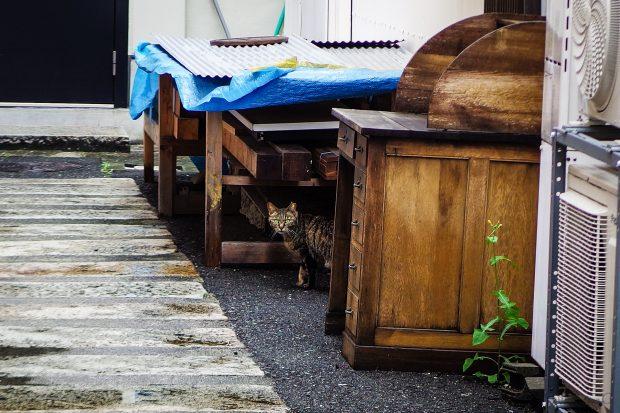 Today's Cat@2016-05-30