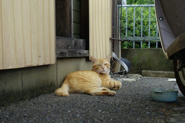 Today's Cat@2021−08−09